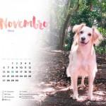 Novembro_Nina2